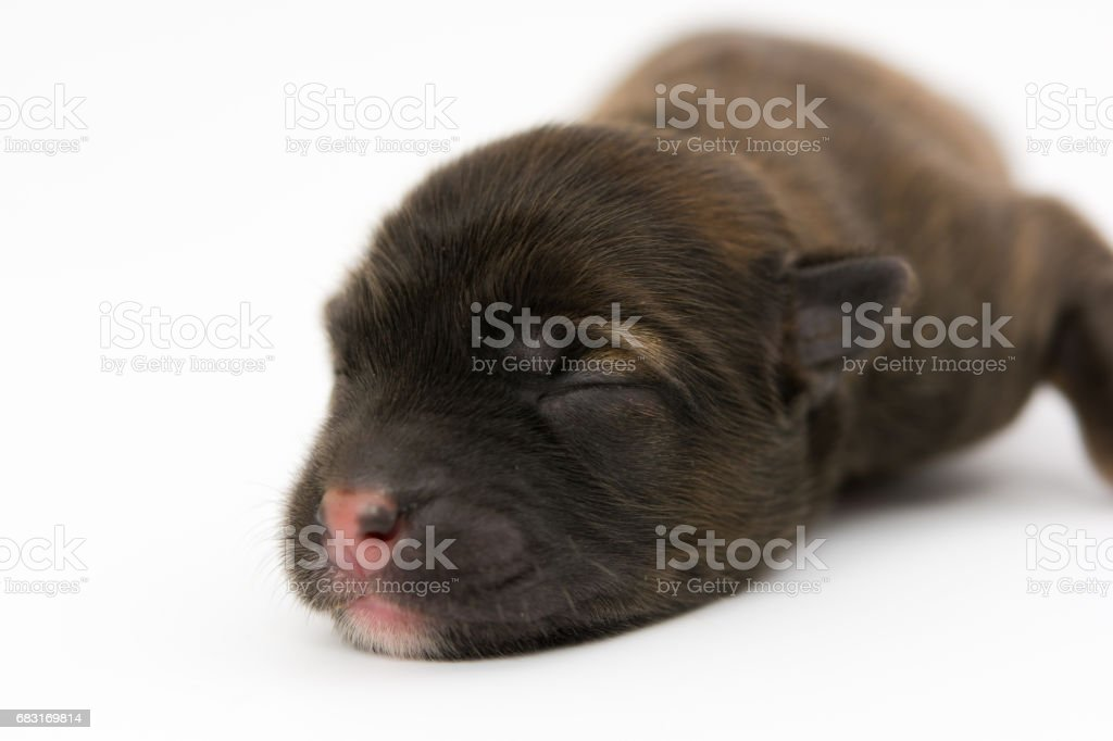 One day for newborn pup isolate foto de stock royalty-free