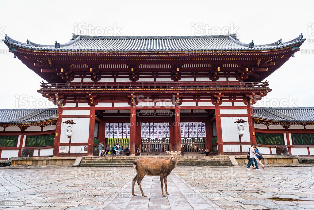 One deer standing in front of the Todai-ji temple stock photo