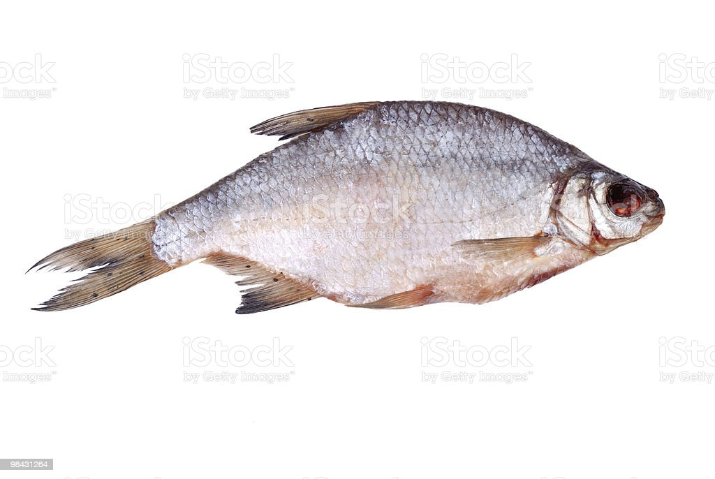 One dried whole sea roach on white royalty-free stock photo