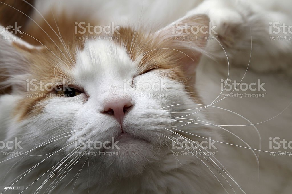 one eye open cat face stock photo