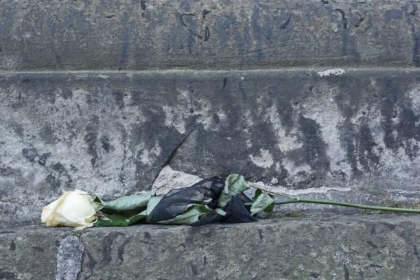 eine verblasst weiße blüte einer rose mit schwarzen band als symbol der trauer - trauer abschied tod stock-fotos und bilder