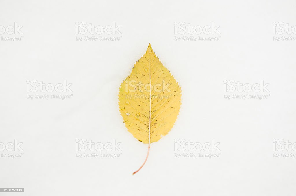 one fallen leaf lie on the snow stock photo