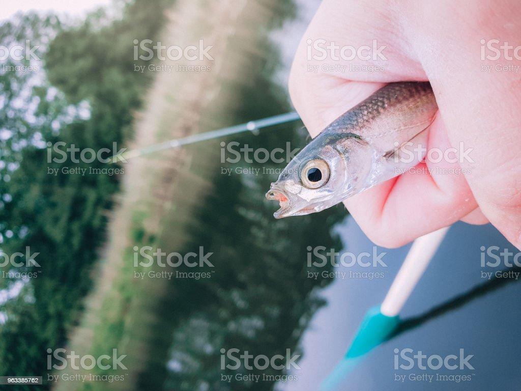 one fish caught in a fishing trapped in a man's hand against a l - Zbiór zdjęć royalty-free (Biwakować)