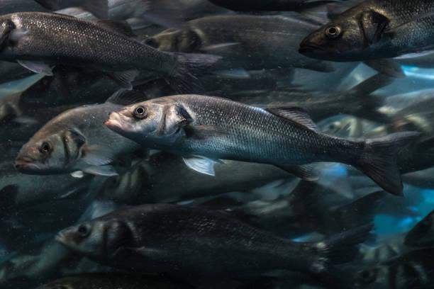 ein Fisch in großer Fisch Schwarm stehend aus der Masse – Foto