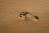 One footprint of human feet on the sand on the beach at sunset, texture abstract background