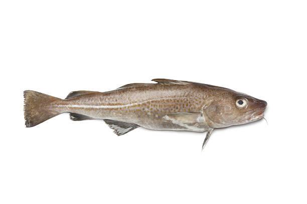 peixe fresco bacalhau-do-atlântico - cod imagens e fotografias de stock