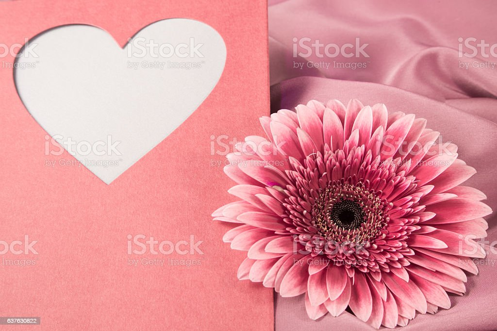 One gerbera flower on a background from silk  fabric stock photo