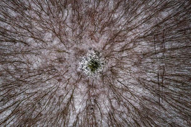 un árbol frondoso rodeado por ramas - gangrena fotografías e imágenes de stock