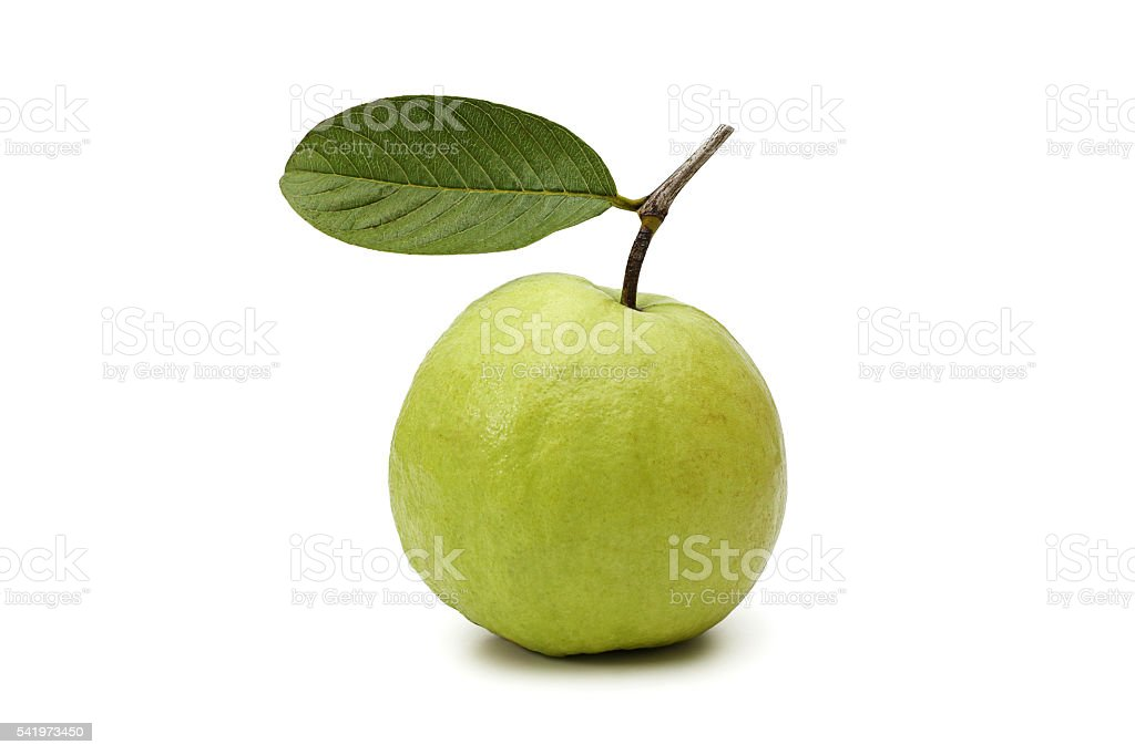 One guava fruit stock photo