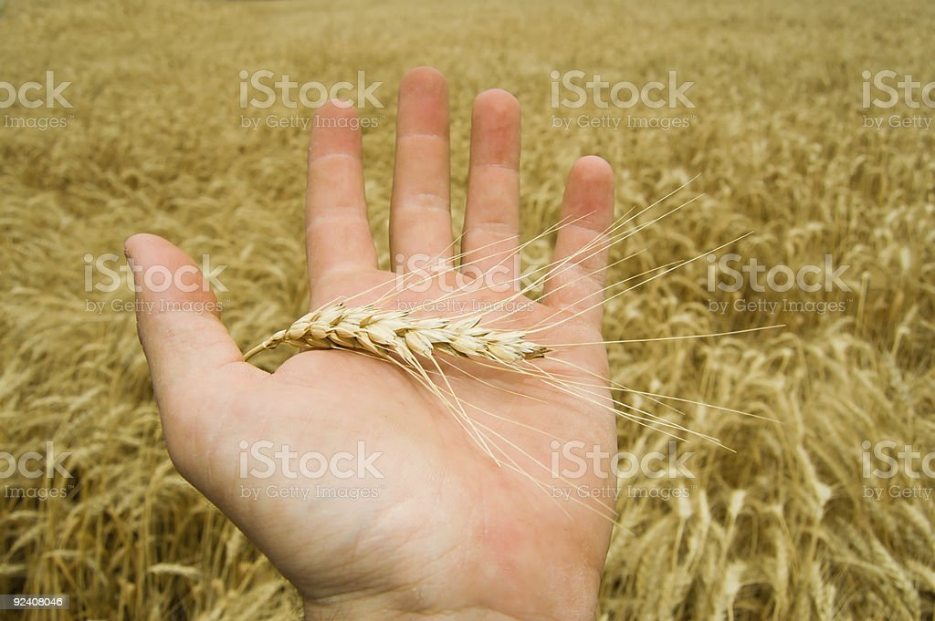 one hand royalty-free stock photo