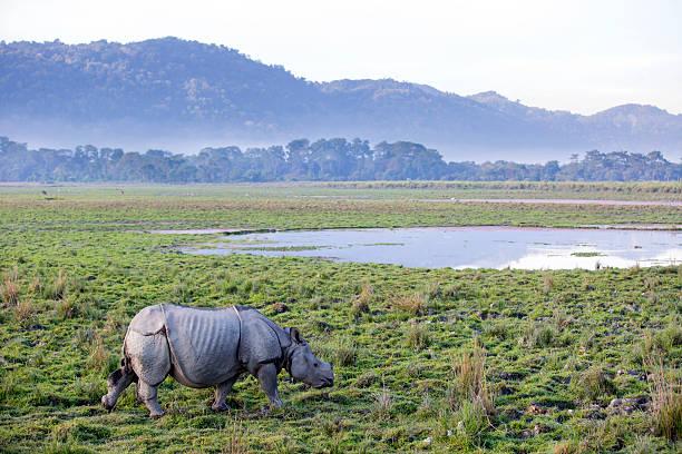 Rinoceronte una cornuda - foto de stock
