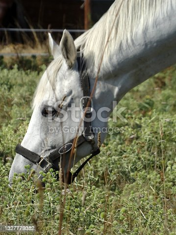 istock One horse head on grass 1327779382