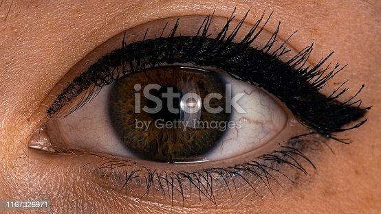 one human green brown female eye close up art