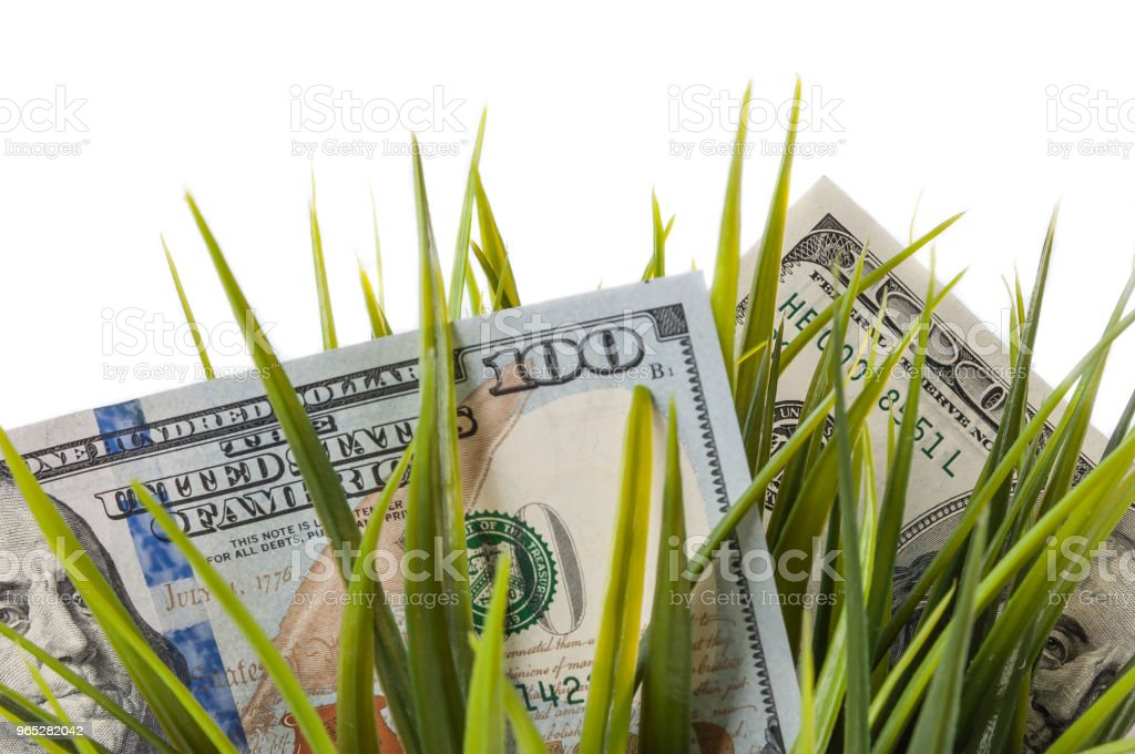 One hundred dollar bills among green grass on a white background. royalty-free stock photo
