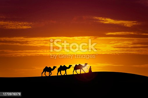 one indian with three camels silhouettes in dunes of desert on sunset