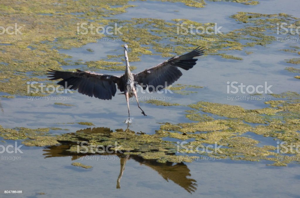 One landing gear only. stock photo