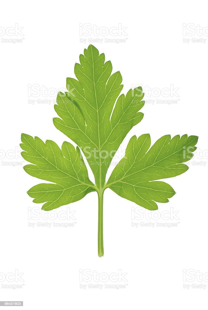 One leaf of green parsley on white royalty-free stock photo