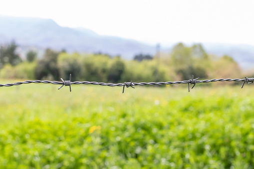 One line of gray barbed wire with three knots against a background of green grass and trees
