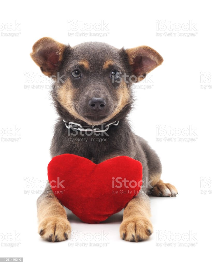 One little dog with a red heart. stock photo