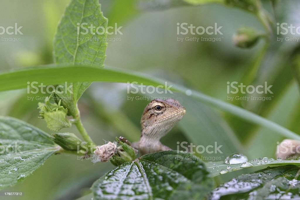 One little lizard  look for something stock photo