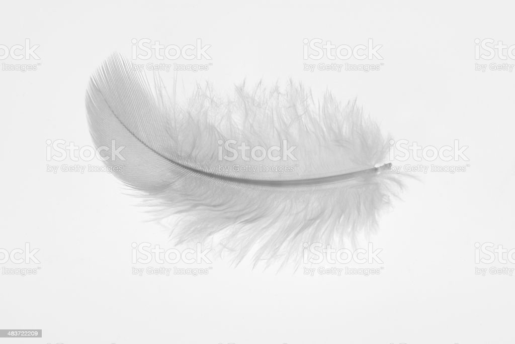 One little white birds feather on a white background stock photo