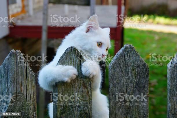 One little white kitten on a gray wooden fence picture id1053255680?b=1&k=6&m=1053255680&s=612x612&h=vjln12ovz5yqubzvdbcbrpzammf3tk9f2zdflyr9umm=
