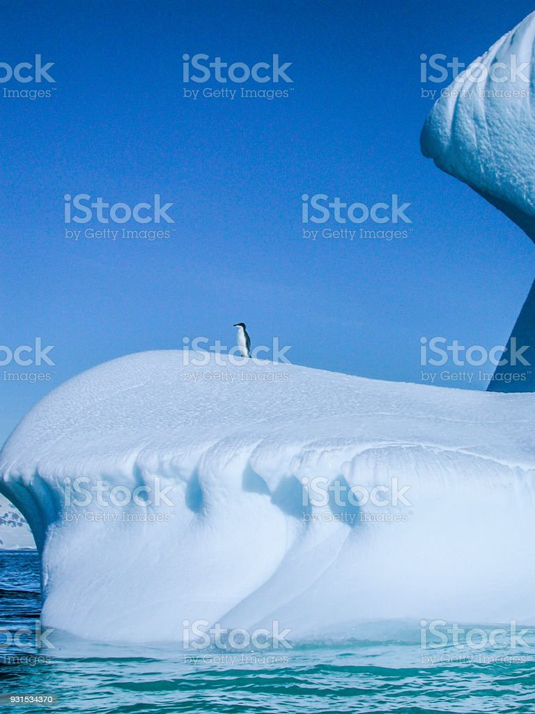 One Lone Wild Adelie Penguin Standing on Iceberg stock photo
