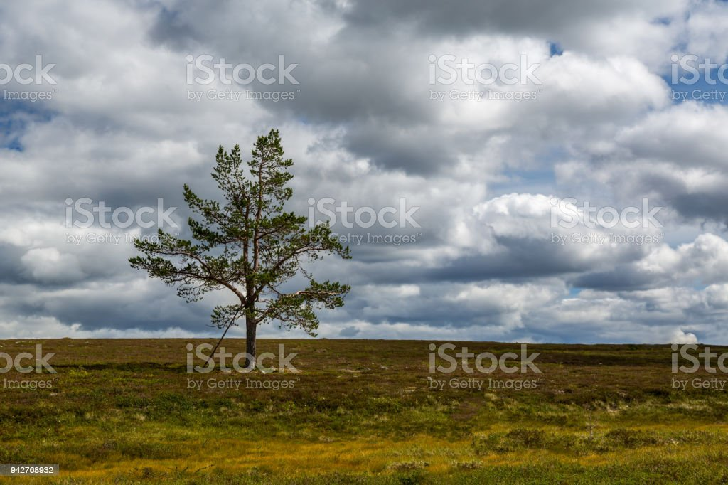 One lonely pine tree in a dramatic colorful mountain landscape with cloudy sky. stock photo