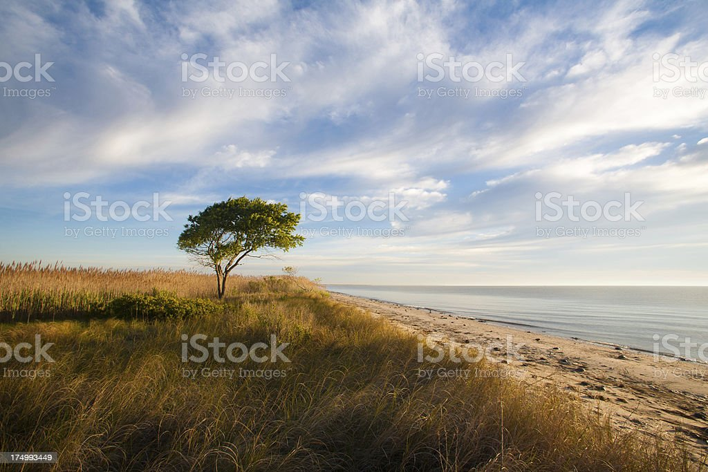 One lonely tree stock photo