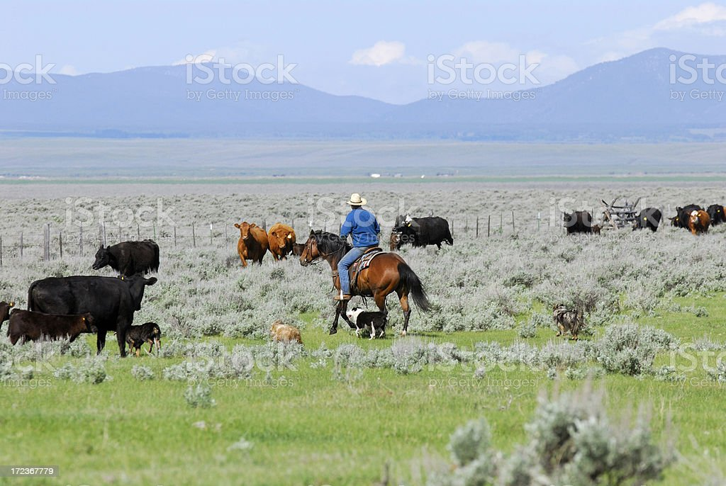One Man and Four Dogs stock photo