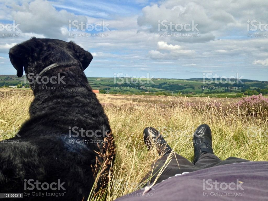 One Man and His Dog stock photo