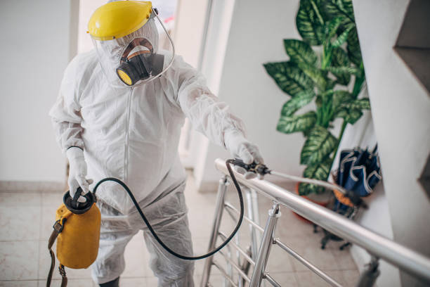 One man in protective suit spraying the house , and disinfecting the staircase fence stock photo