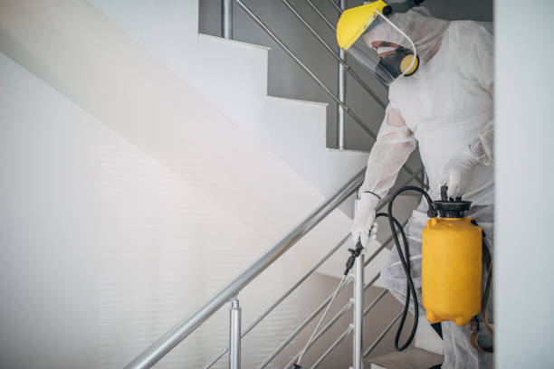 One man in protective suit spraying the house , and disinfecting the staircases One man in protective suit spraying the house , and disinfecting the staircases decontamination stock pictures, royalty-free photos & images