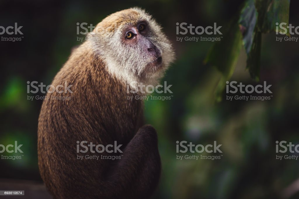 One monkey sitting on a florest looking back at the camera stock photo