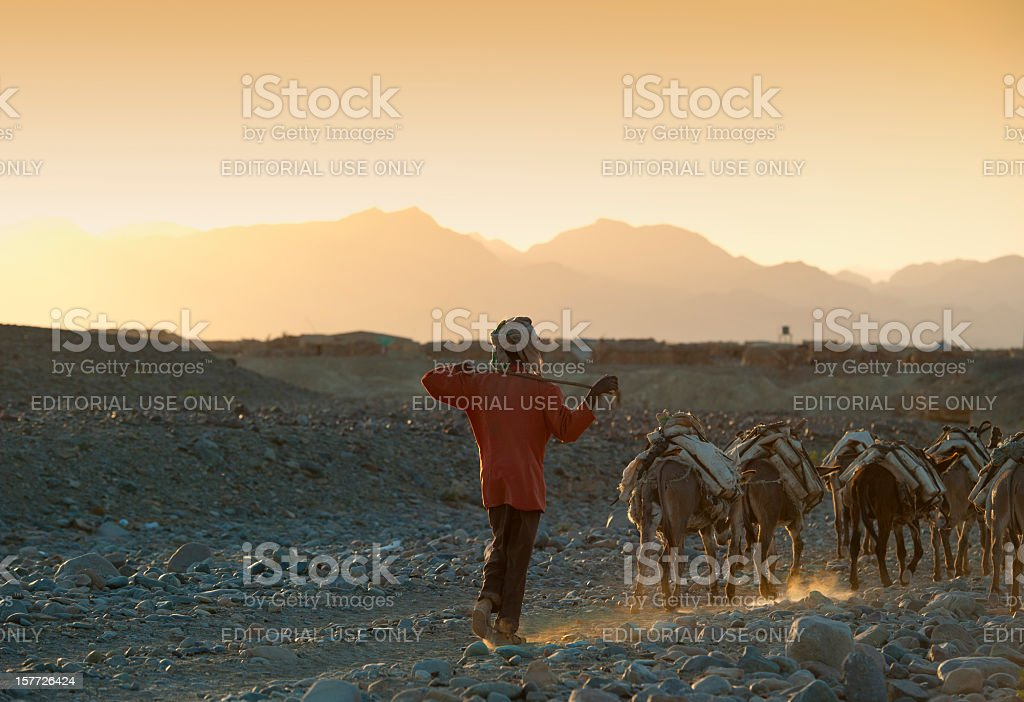 One of the last salt caravans, Danakil Desert, Ethiopia royalty-free stock photo