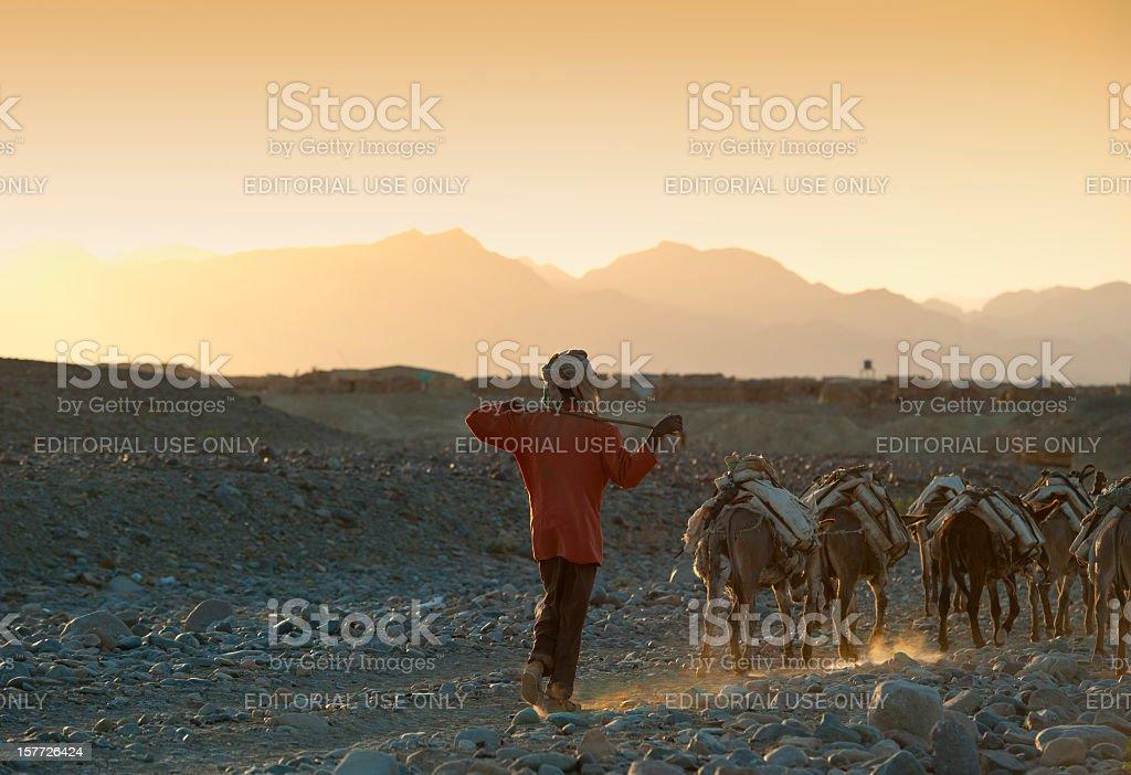 One of the last salt caravans, Danakil Desert, Ethiopia stock photo