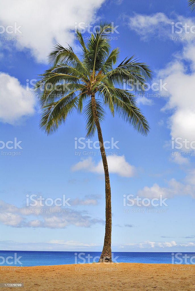 One Palm Beach royalty-free stock photo