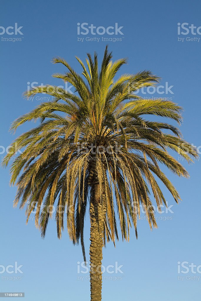 one palm royalty-free stock photo