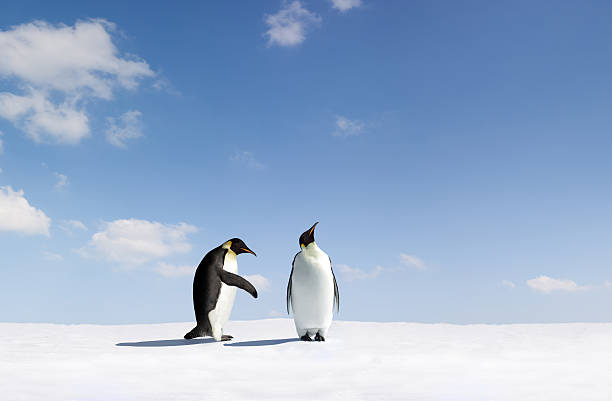 One penguin rejects another penguin's gesture stock photo