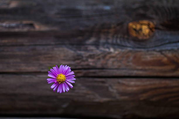 One pink flower on a wooden surface stock photo