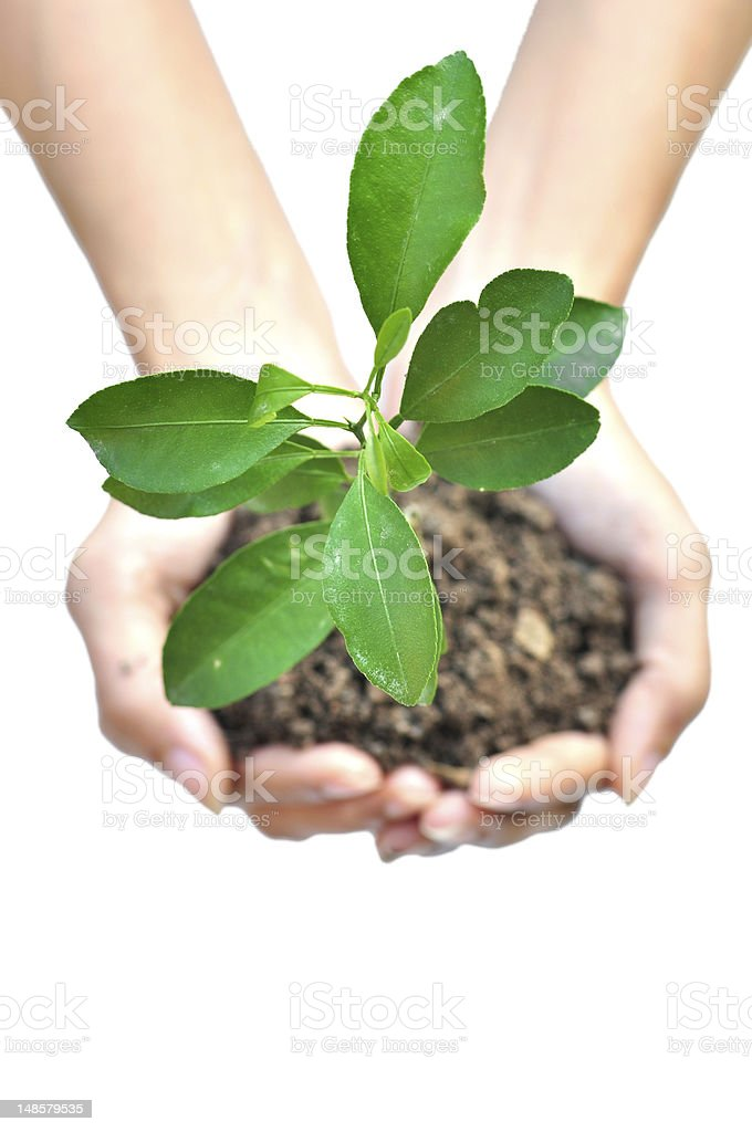 One plant in female hands royalty-free stock photo