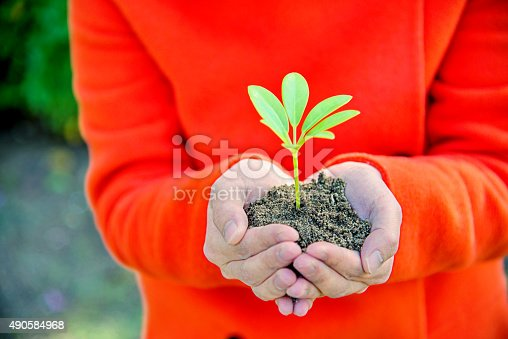 621615390istockphoto One plant in female hands 490584968