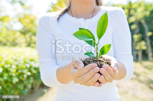 621615390istockphoto One plant in female hands 490585048