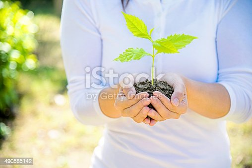621615390istockphoto One plant in female hands 490585142