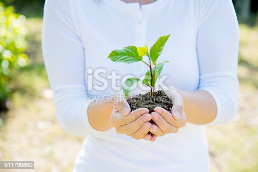 621615390istockphoto One plant in female hands 511795860