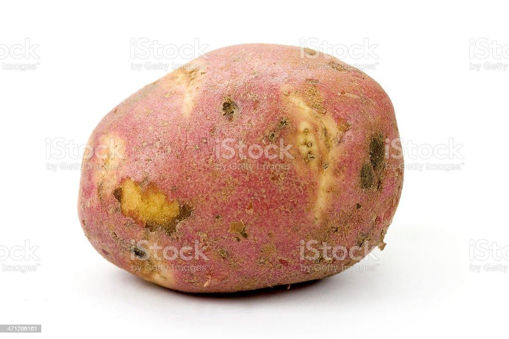 One raw potato royalty-free stock photo