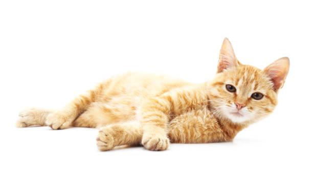 One red cat picture id883150076?b=1&k=6&m=883150076&s=612x612&w=0&h= yig19sztr75jgpqwftkvb axc5lxqwuls szqwveyo=