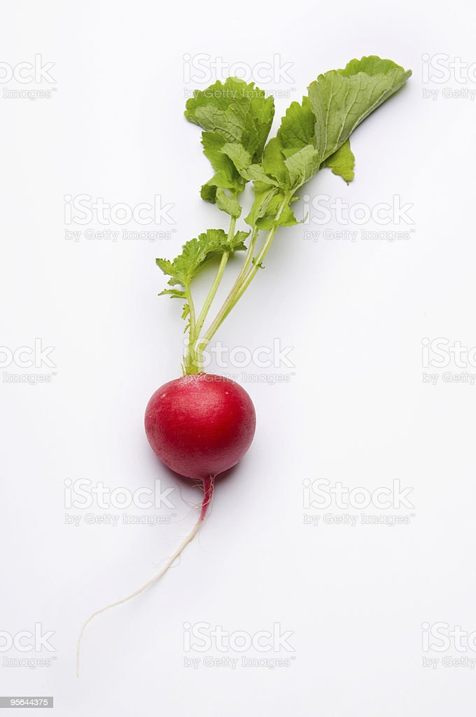 One red radish isolated with white background royalty-free stock photo