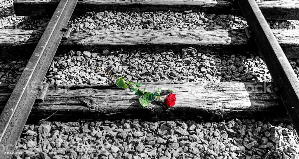 One red rose on a black and white rail track stock photo