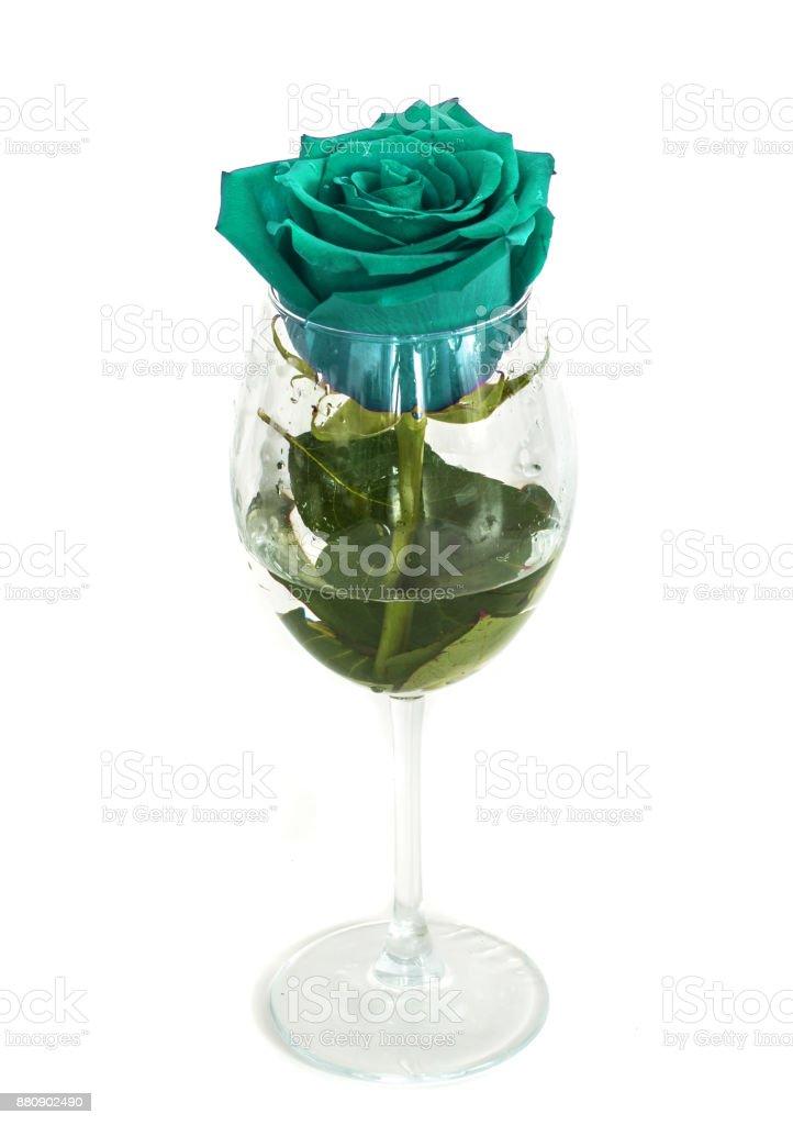 una rosa en una copa sobre un fondo blanco, - foto de stock
